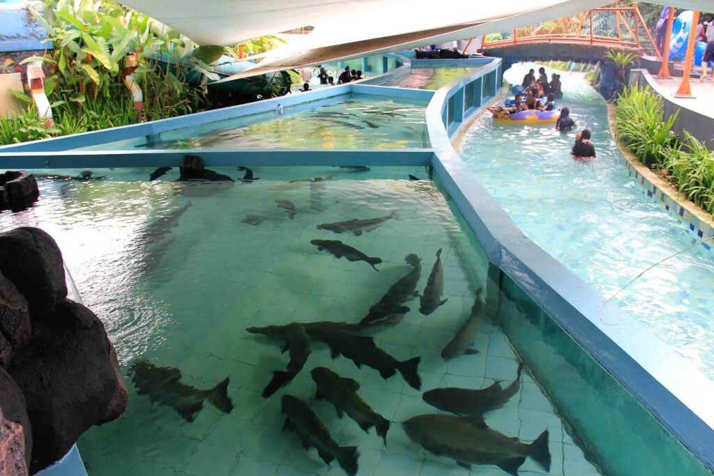 Wahana Giant Aquarium The Jungle Waterpark Bogor